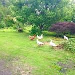 backyard_n